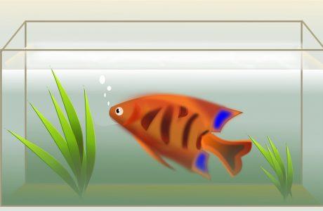 הקריב את בנו בגלל אוכל של דגים * סיפור מכמיר לב שהוביל בחור טוב מישיבה טובה מדחי אל דחי * סיפור קשה עם הרבה מאד מוסר השכל